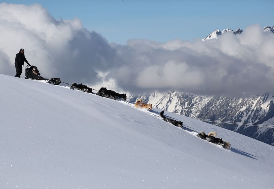 La Plagne Ski Resort - Dog sledding (©m.bernal)