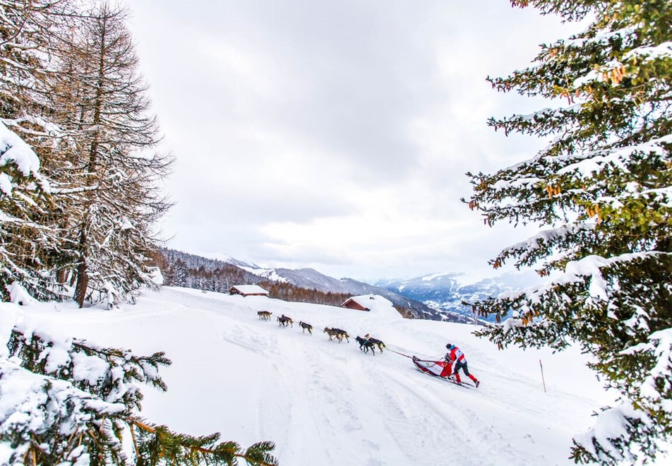 La Plagne Ski Resort - Dog sledding (©vincent-piccerelle)